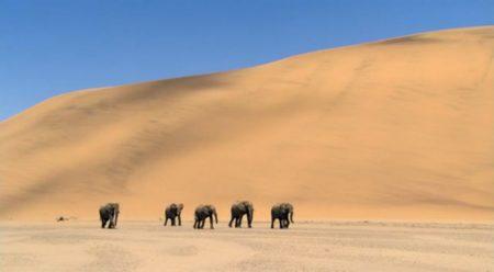 Экологические проблемы пустынь и полупустынь Животные в пустыне