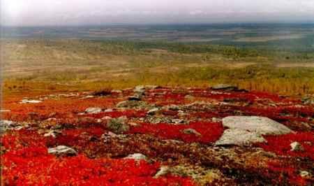 Экологические проблемы в зоне тундры