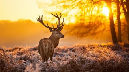 Природа и человек Самое красивое и ценное на нашей планете то чем мы гордимся чем любуемся и восхищаемся природа Ее пейзажи обворожительны ее обитатели удивительны